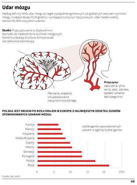 Udar mózgu (infografika PAP)