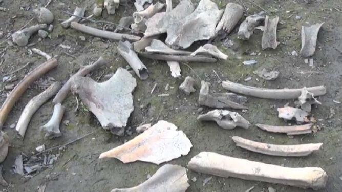 """""""Wskrzeszenie mamuta"""". Naukowcy chcą odtworzyć wymarły gatunek"""