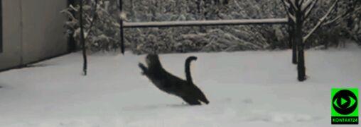 """Stęskniony za zimą kot. """"Uwielbia, gdy naciera się go śniegiem albo rzuca w niego śnieżkami"""""""