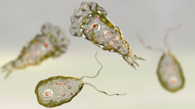 Śmiertelnie niebezpieczna ameba w wodociągach. Ostrzeżenie dla mieszkańców Teksasu